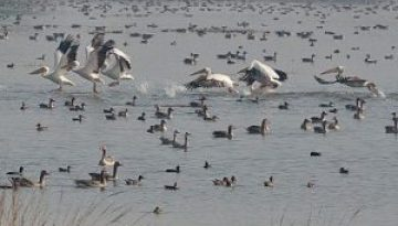 PATNA BIRD SANCTUARY JALESAR