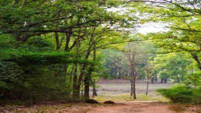 हरित वन दृश्य.