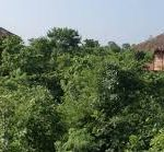 Forest Area and Nature View of Bar Navapara