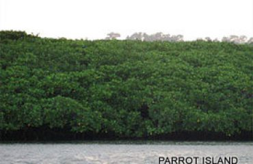 Parrot Island Image