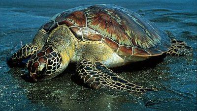 Turtle Hatchery at Kalipur Beach Image