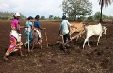 Farmers Ploughing in Black Soils