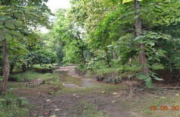 Adilabad Nature forest