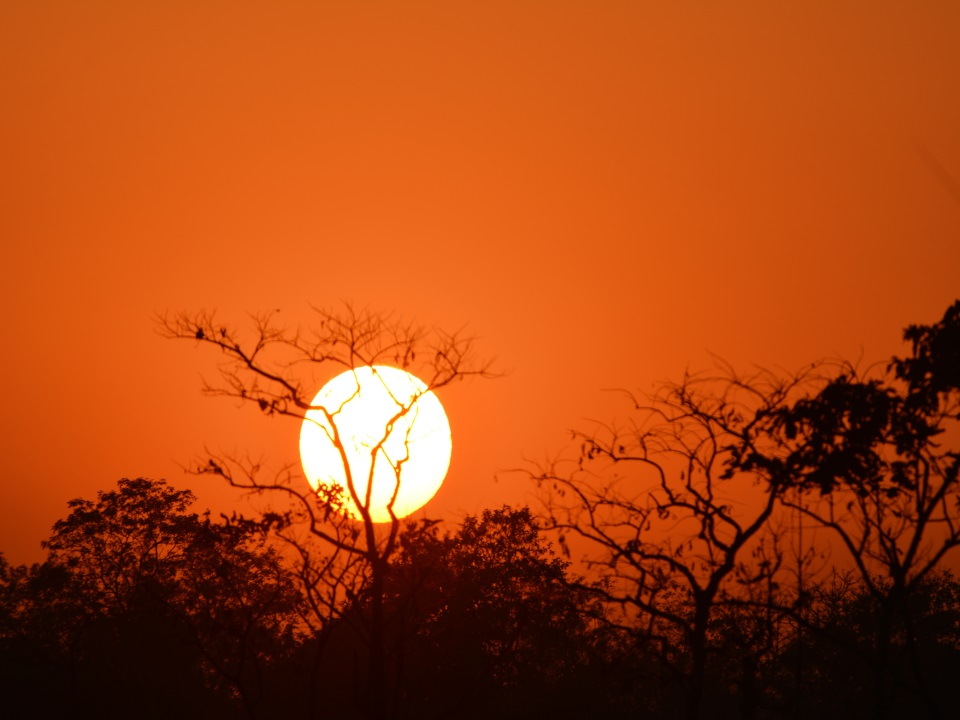 (Sun Rise in Tiger Reserve)