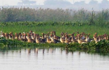 Okhla Bird Sanctuary Image
