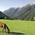 Horse Grazing at upper side