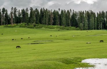 Grazing area of Doodhpathri