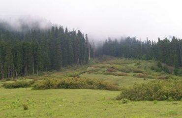 Clouds view in forest area