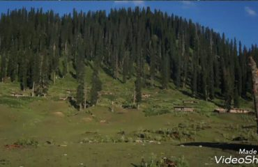 Tosamaidan Forest Site