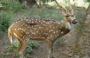 Deer Park in Neyyar Dam.