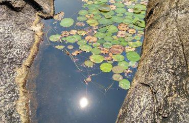 Pond, Valli malai