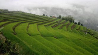 Terraced paddy fields near Mariyang in Upper Siang District