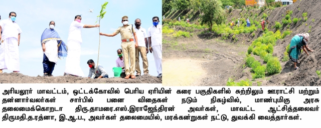 Palm seed planting