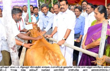 Vaccination camp started for Foot-and-mouth disease of cattle