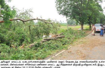 Gaja Storm Damage
