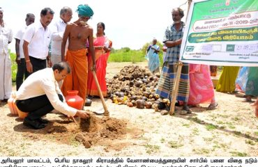 District Collector started the work of planting palm seeds