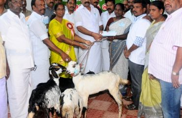 Free Goat distribution function