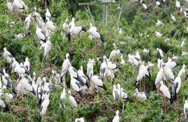 Vettangudi Bird Sanctuary birds.