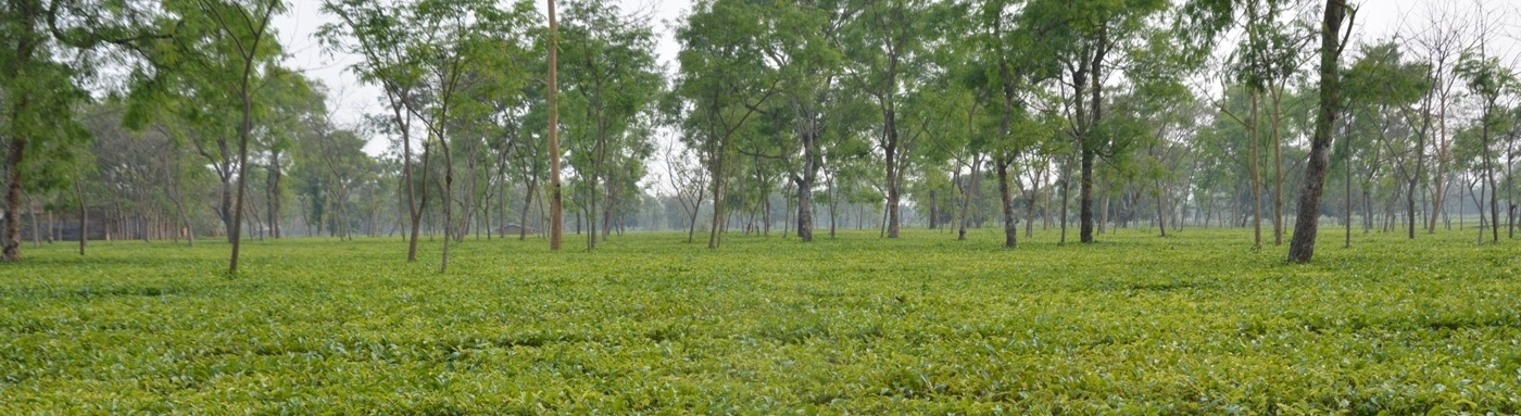 Welcome to Kishanganj District | Official Website of