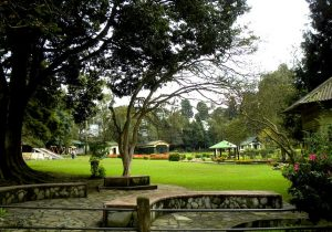 An Image of Lady Hydari park