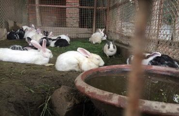 lake_paradise_ rudrapur_rabbits