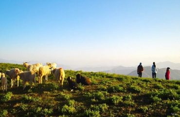 Shepherding at Nagtibba