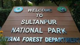 Sultanpur National Park, Gurugram