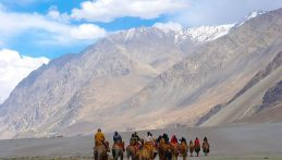 Camel safari in Nubra valley