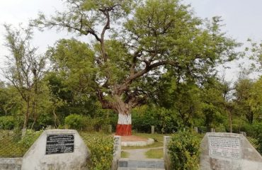 BAWANI IMLI TREE