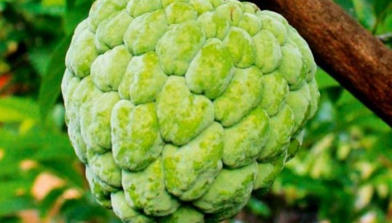 Custard Apple.