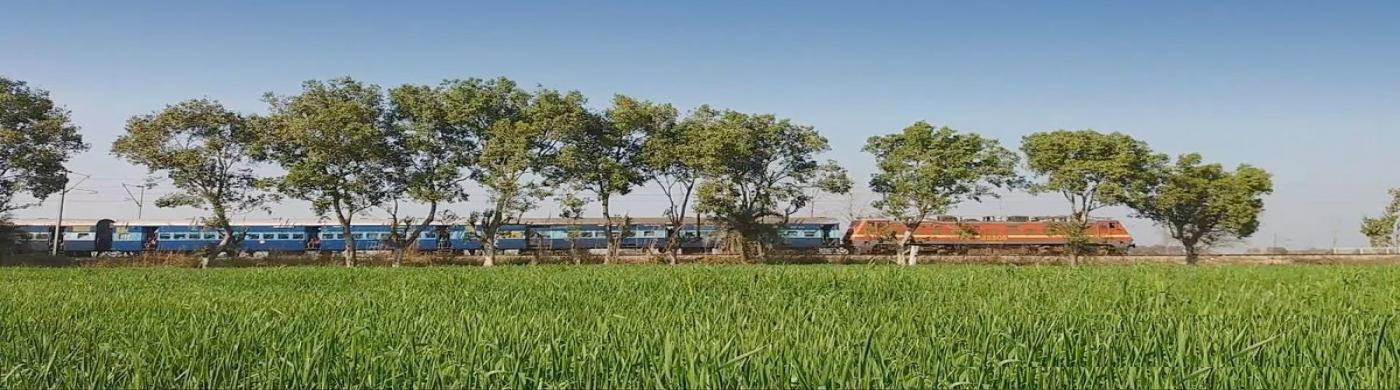 train and sugar cane field