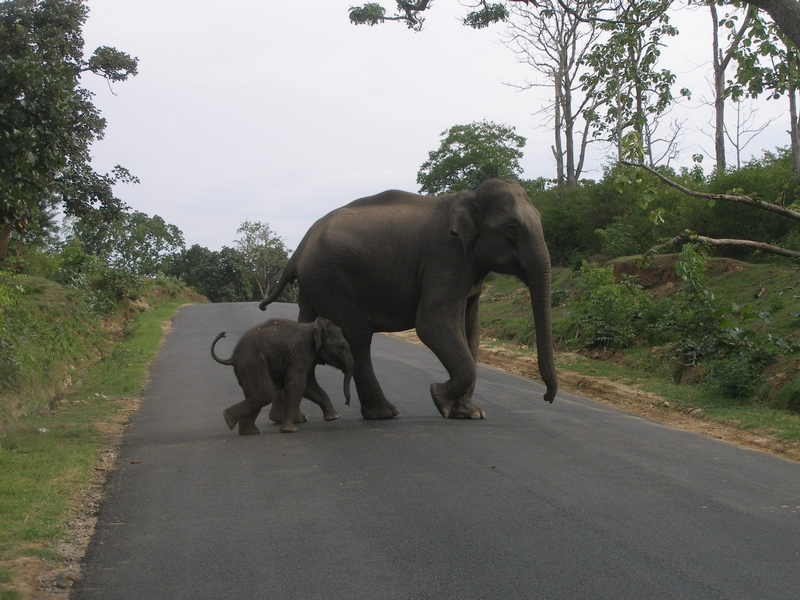 An adult elephant and baby elephant