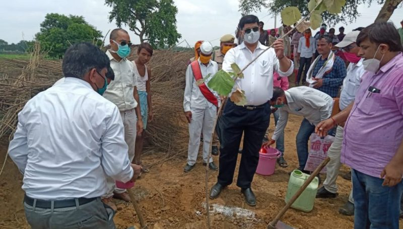 Tree Plantation by DM and SP on World Environment Day