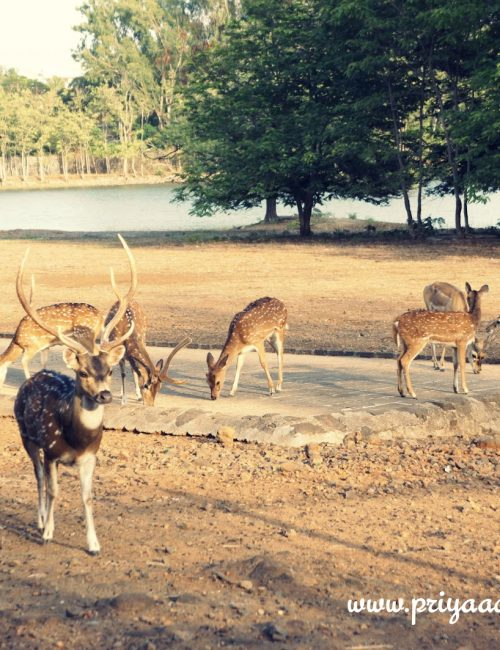 Deer in New Palace..