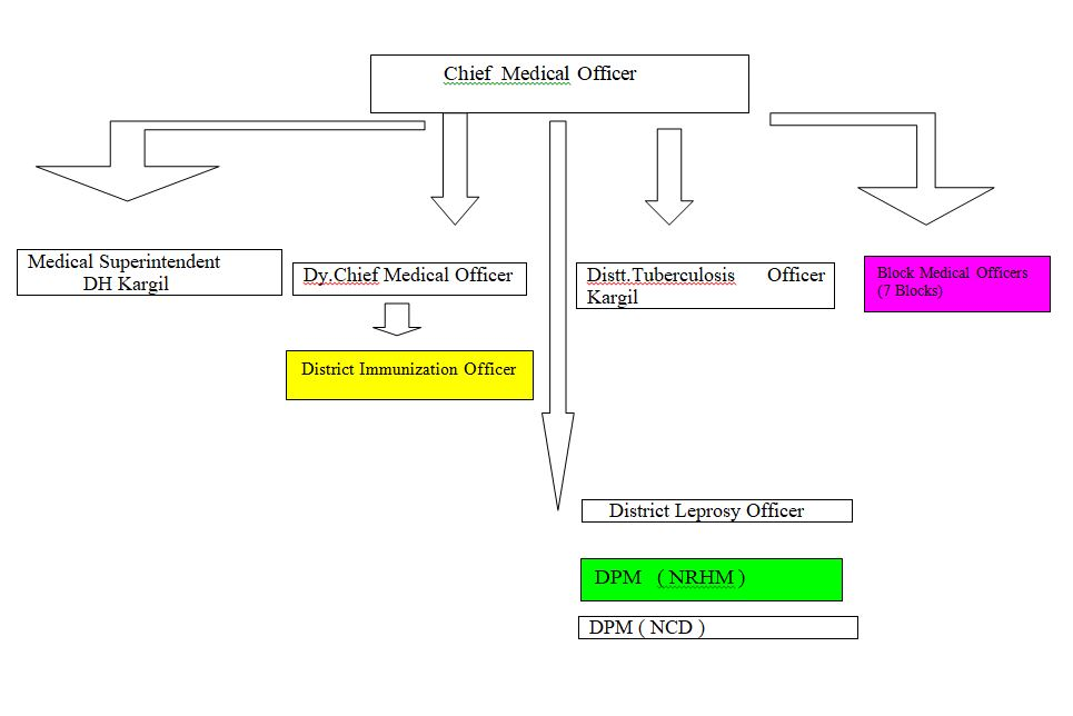 Medical Organisation Structure Diagram