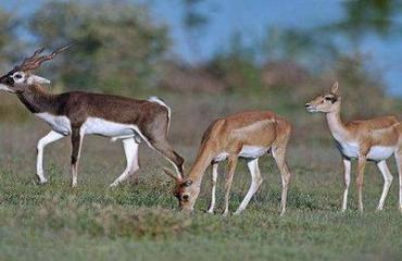 Sagareshwar Wildlife Santuary - Sagareashwar