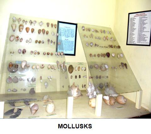 mollusks.