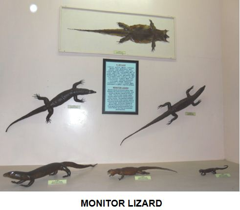 monitorlizard.