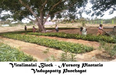 Rural Development - Nursery Plantation Vadugapatti.