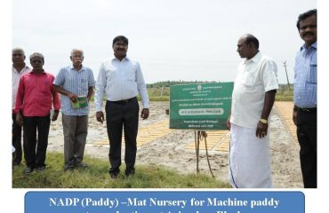Agriculture - Mat Nursery for Machine Paddy transplanting.