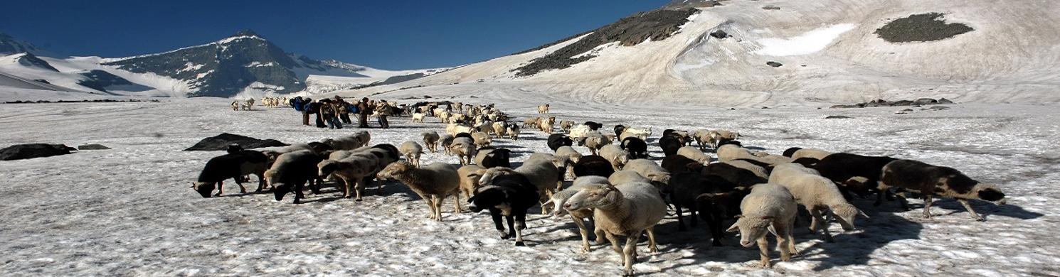 Thamsar Pass Kangra
