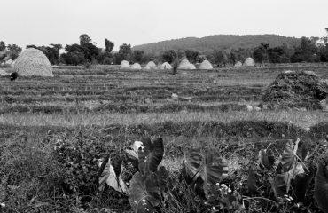 काँगड़ा घाटी का दृश्य