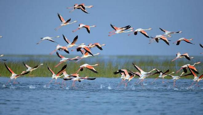 Foreign Birds in Chilika