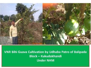 vnr-guava-cultivation