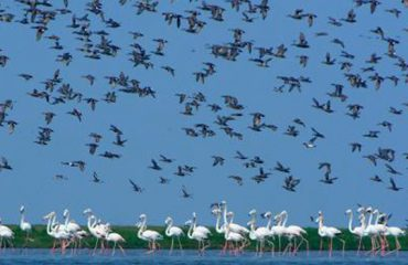 Aquatic Birds in Chilika