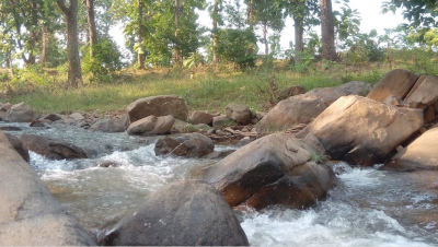 River view in forest