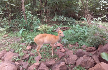 Wildlife View of Mangata