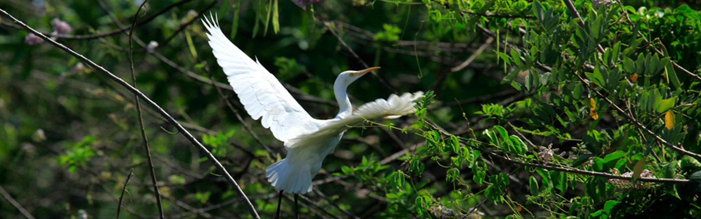 Bird Sanctuary Kumarakom