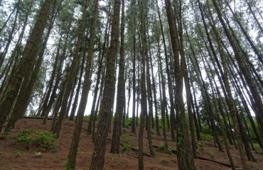 Vagamon Pine Valley