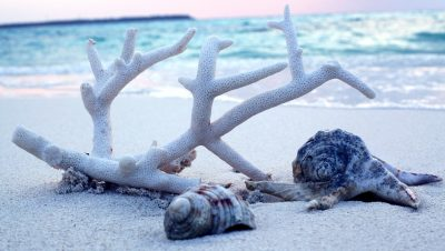 समुद्र तट पर कोरल